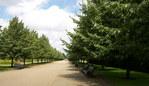 マンション植栽 造園