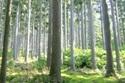 フォーラム「木で暮らす 木で稼ぎ、木で生きる」